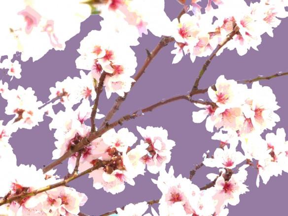 japanskt körsbärsträd poster lila illu2 liten