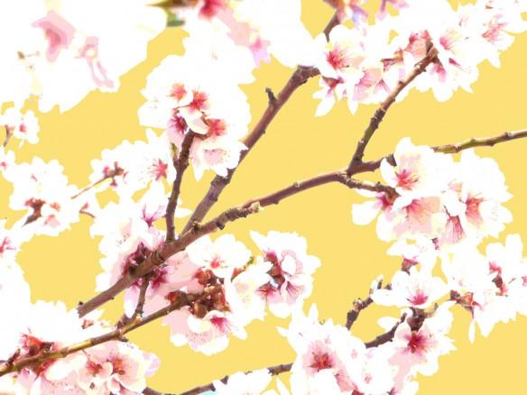 japanskt körsbärsträd poster liten